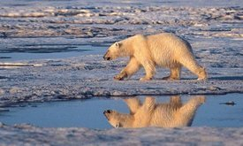 Oilpocalypse? Shell's Arctic Drilling Plans Move Forward